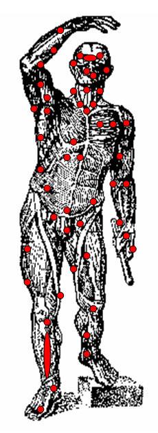 Примерная схема расположения болевых точек на теле человека.  Такими чувствительными точками являются...